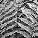 Ferns in B&W by tasadam