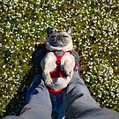 Blissed Out Pug Takes Confetti Flower Nap by pugventurephoto