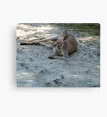 Having A Lazy Afternoon Canvas Print