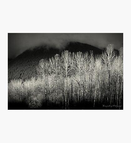 Arbres en noir Photographic Print
