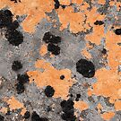 Orange Lichen by tasadam