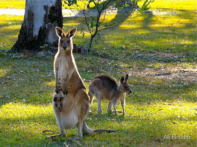 Skippy and friends. Australia by Ali Brown