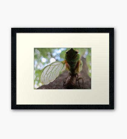 My Left Wing Framed Print