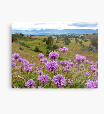 Mission Mountains and Horsemint Metal Print