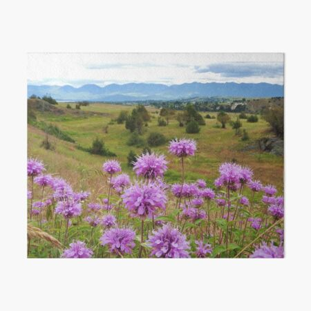 Mission Mountains and Horsemint Art Board Print