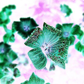 Photoshopped Flower 2 by yvonnecarsley