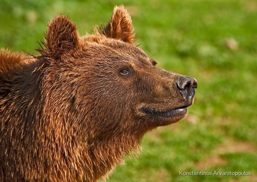 Teddy bear by Konstantinos Arvanitopoulos