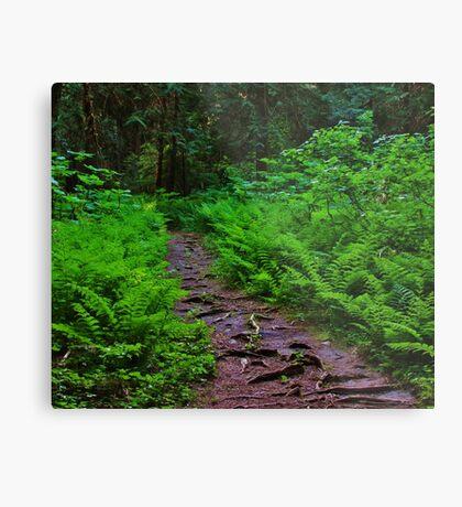 Path to the Old Cedars Metal Print