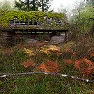 Mayne Island Abandoned Cabin - The Cabin by toby snelgrove  IPA
