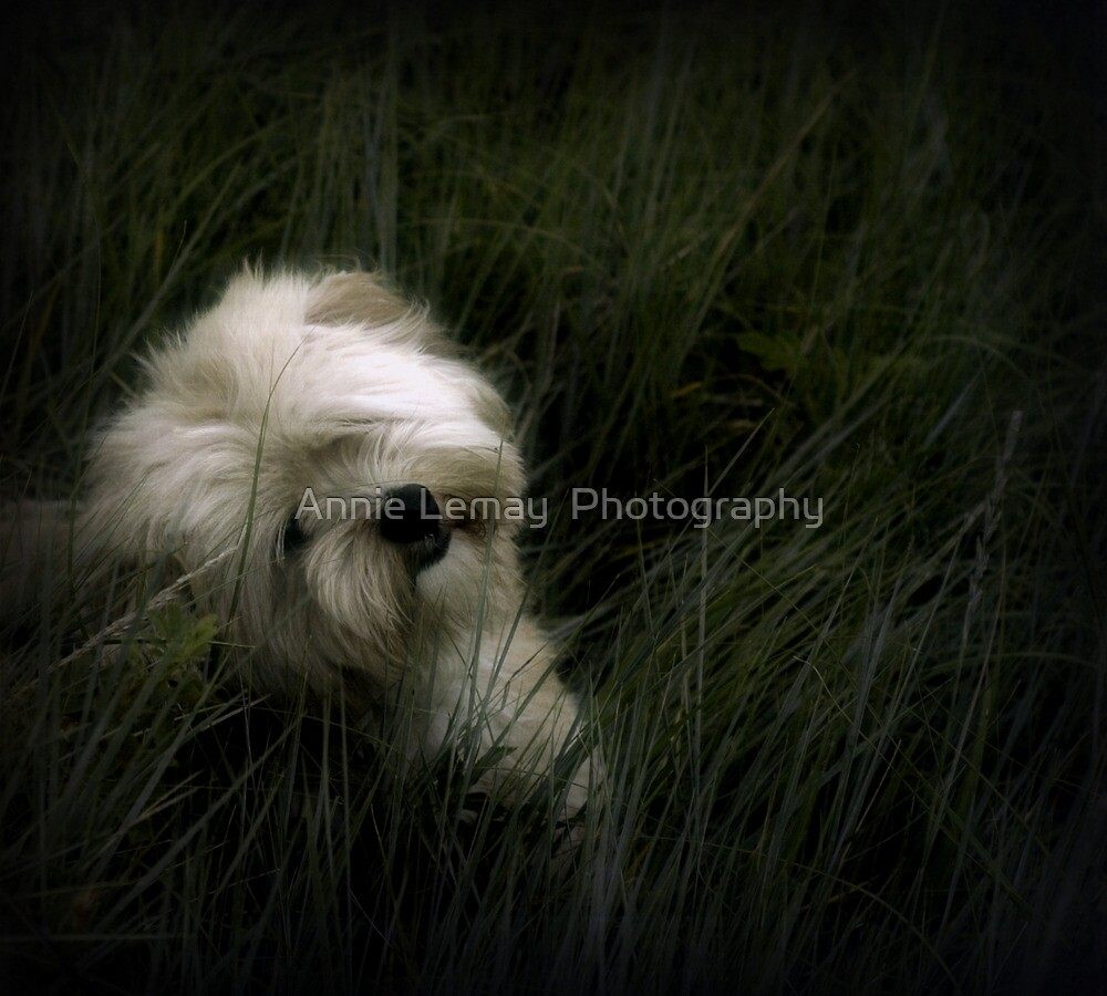 Happy Birthday Gizmo by Annie Lemay  Photography