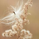 The Soft Side of November by Renee Blake