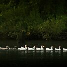 All Your Ducks in a Row by Kathleen Jones