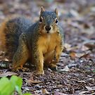 The Squirrel Saga Continues by Alison M