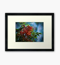 Autumn, mountain ash fine art photography Framed Print