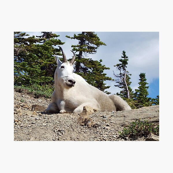 King of the Mountain Photographic Print