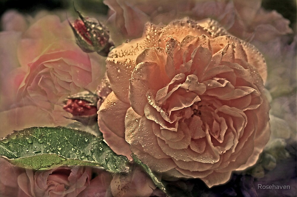 """""""Dreaming Roses..."""" by Rosehaven"""