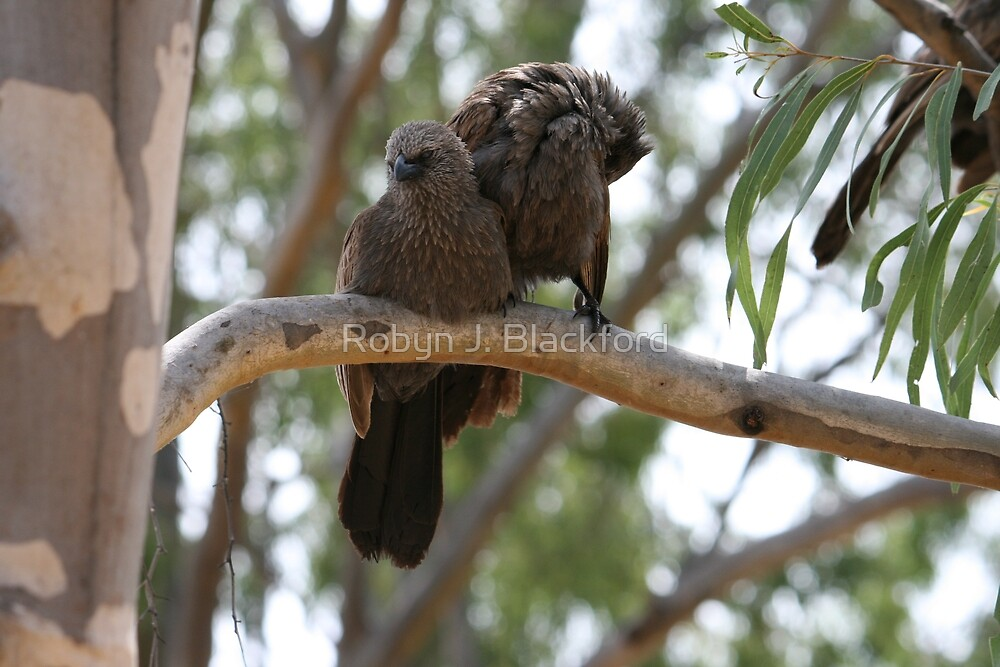Bishop Birds at Lake Boondooma by aussiebushstick