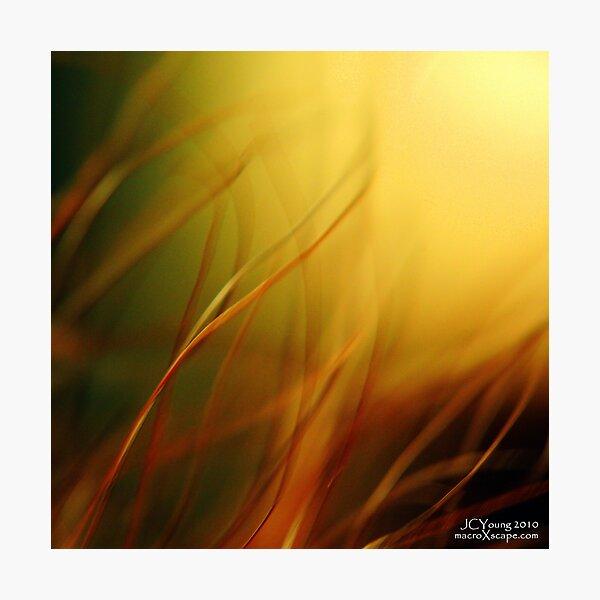 Sun Worshippers Photographic Print