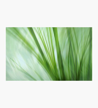 dancing grasses Photographic Print