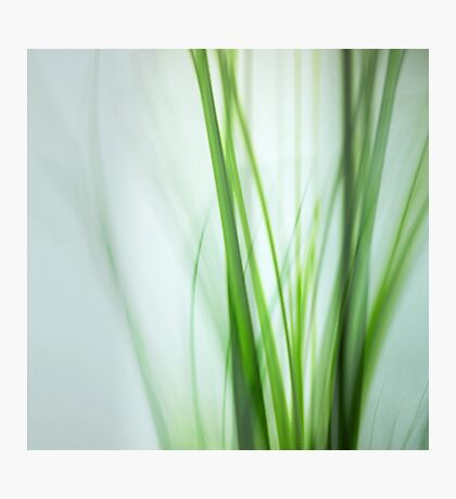 green whispers Photographic Print