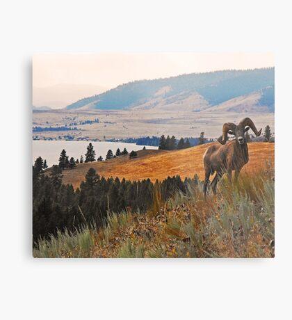 Wild Horse Island Ram Metal Print