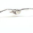 Shadowcaster / Snowy Owl by Gary Fairhead