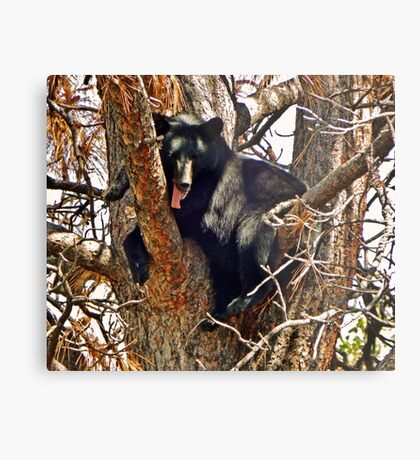 Not much for shade! Metal Print