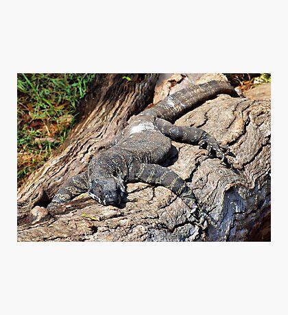 Iguana - Guana - Goanna Photographic Print