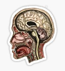 Sagittal head section Sticker