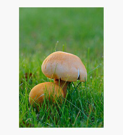 Golden Bootleg, Golden Cap Photographic Print