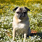 Sunny California Day by pugventurephoto
