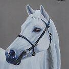 White horse portrait, Kyneton Moorlight by cathyscreations