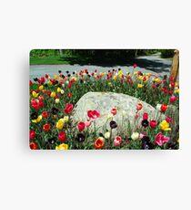 Tulip Ring Around the Rock Canvas Print