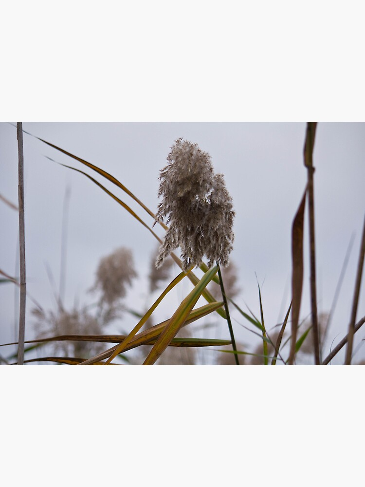 Tall Grass in Autumn by LynnWiles