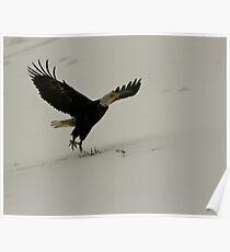 Flying Eagle - Dutch Harbor Poster