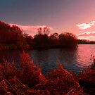 PINK SUNSET by leonie7