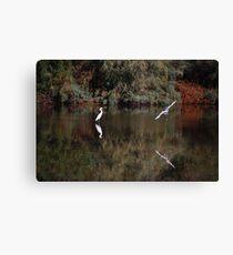 Snowy White Egret Landing Canvas Print