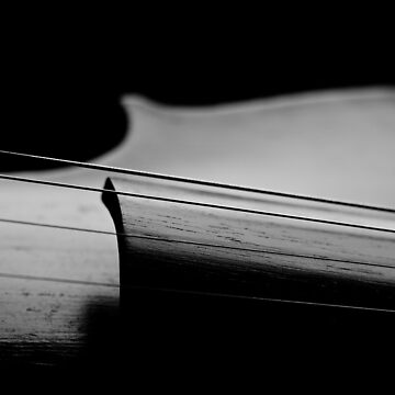 Old violin black and white by sustine