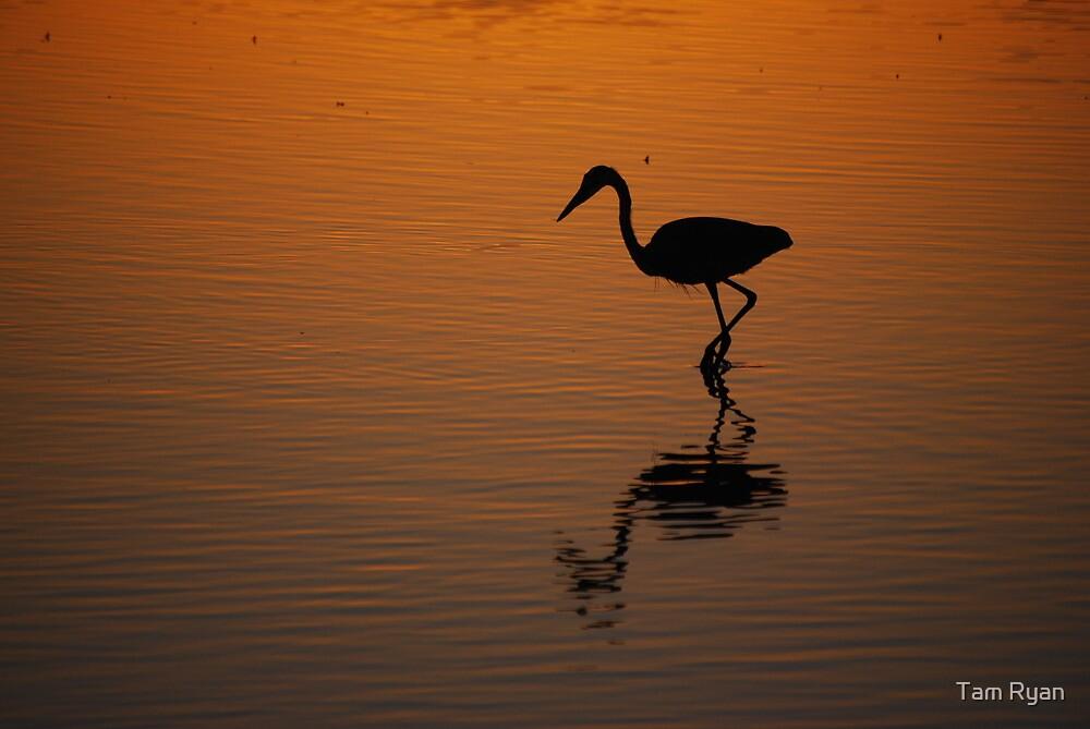 Egret at Sunset by Tam Ryan