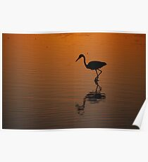 Egret at Sunset Poster