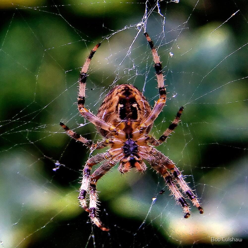 Damage Limitation (Arachnophobic?) by Bob Culshaw