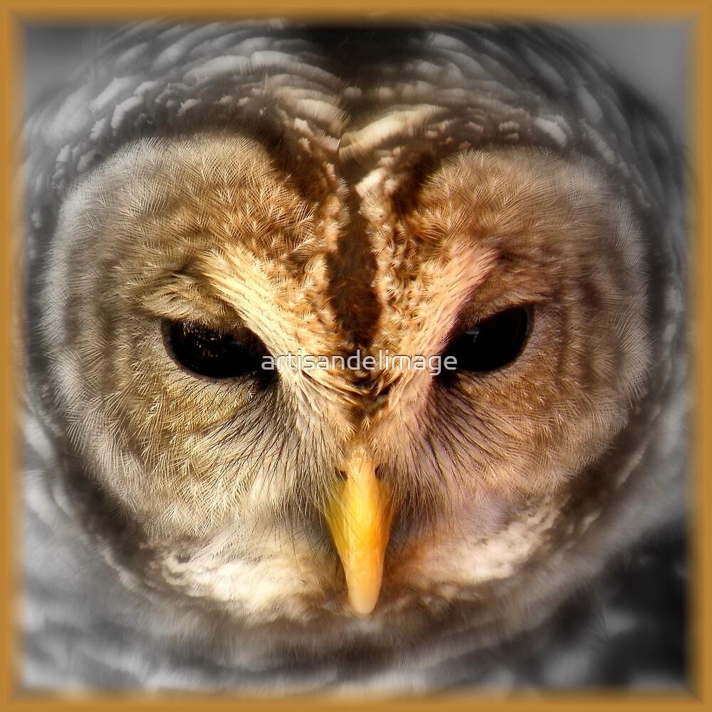 Wise Bird by artisandelimage