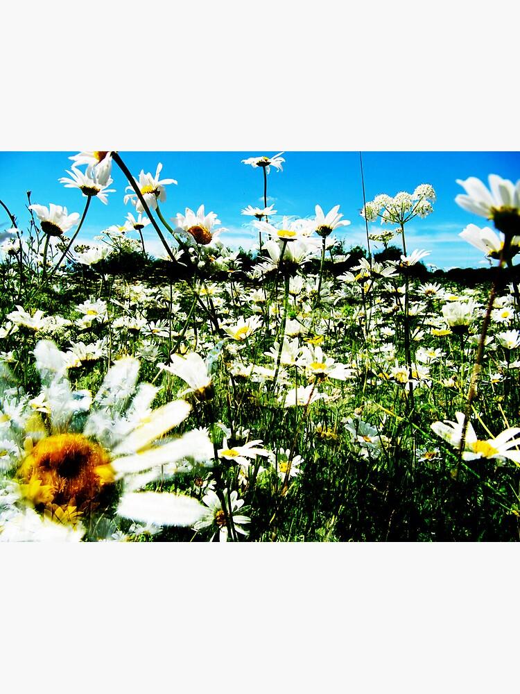 Daisy's Field by Briandamage