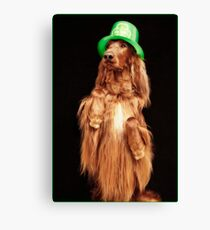 Irish Charmer Canvas Print