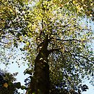 Autumn tree by Liam O'Brien