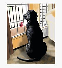 Ajax Watches the World Go By Photographic Print