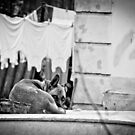 Can I sleep now? by C. & L. | ABBILDUNG.ro Photography