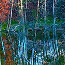 Swamp by Carolyn Prior
