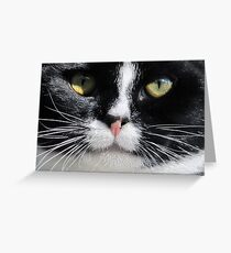 Staring Contest Greeting Card