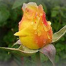 Spring showers 2010 - Adolph Horstman  by EdsMum